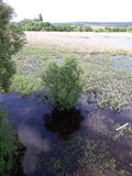 Het meer van het moeras Royalty-vrije Stock Fotografie