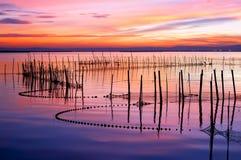 Het meer van het riet stock afbeelding
