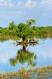 Het meer van het Sap van Tonle, Kambodja. stock foto's