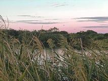 Het Meer van het Sulffolkpark, Byron Bay, NSW, Australië Royalty-vrije Stock Fotografie