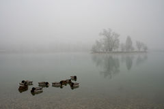 Het meer van Jarun stock foto