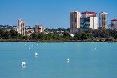 Het meer van Laszoutmeren in Calpe, Spanje met sommige flamingo's royalty-vrije stock afbeeldingen