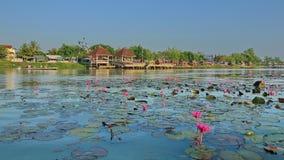 Het meer van Lotus stock afbeeldingen