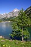 Het meer van Montain royalty-vrije stock afbeeldingen