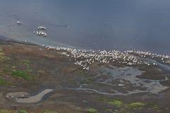 Het meer van Nakuru Stock Afbeelding