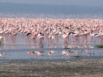 Het Meer van Nakuru van flamingo's Royalty-vrije Stock Fotografie