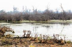 Het meer van Neakpean Stock Afbeelding