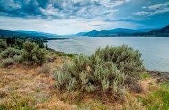 Het Meer van Okanagan dichtbij Mening Naramata met Borstel Royalty-vrije Stock Afbeelding
