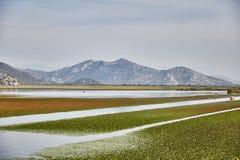 Het meer van Skadar Nationaal Park montenegro De zomer stock foto