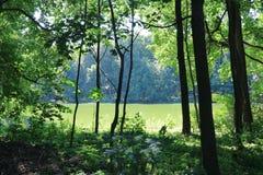 Het meer wordt omringd door gebladerte van bomen in het bos stock afbeelding