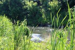 Het meer wordt overwoekerd met lang gras op de banken van een schilderachtige mening stock afbeeldingen
