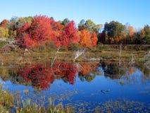 Het meerbezinning van de herfst Stock Afbeeldingen