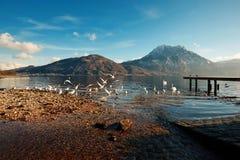Het meerbrug van Altmü nster Vogels moutains Royalty-vrije Stock Fotografie
