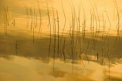 Het meerrefection van het gras in gouden licht Stock Foto's