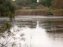 Het meerscène van het land met vogels in water op de hoogste donkere herfst wij Royalty-vrije Stock Foto