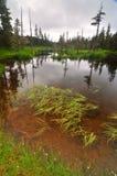 Het meersleep van Elsner stock afbeelding