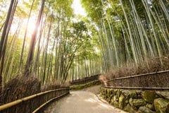 Het meest forrest bamboe Royalty-vrije Stock Fotografie