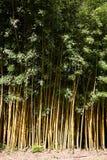 Het meest forrest bamboe Royalty-vrije Stock Foto