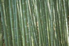 Het meest forrest bamboe Stock Foto