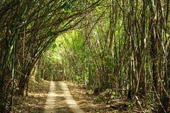 Het meest forrest bamboe Royalty-vrije Stock Afbeeldingen