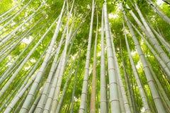 Het meest forrest bamboe Stock Afbeelding