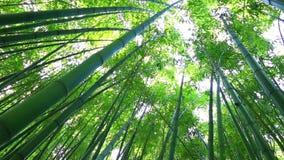 Het meest forrest bamboe