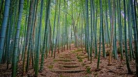 Het meest forrest bamboe Royalty-vrije Stock Afbeelding