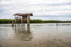 Het meest reforest mangrove Royalty-vrije Stock Afbeelding