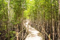 Het meest reforest mangrove stock foto's