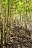 Het meest reforest mangrove royalty-vrije stock foto's
