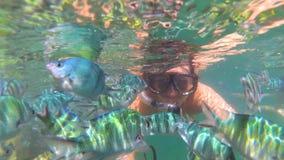 Het meisje baadt in het overzees met vissen Vrij duiken in Maskers stock fotografie