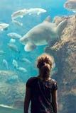 Het meisje bekijkt exotische vissen in het Aquarium royalty-vrije stock foto