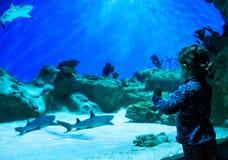 Het meisje bekijkt haaien in mooi aquarium stock foto's