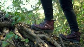 Het meisje beklimt oude boom stock video