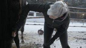 Het meisje bereidt hooi voor paarden voor stock video