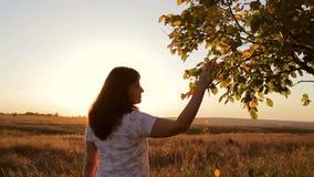 Het meisje bij zonsondergang en gaat de takken van bomen raken stock footage