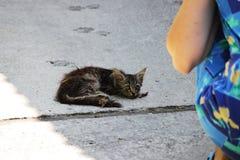 Het meisje boog naast het uitgeputte dakloze katje op de straat royalty-vrije stock fotografie
