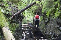 Het meisje dat van de toerist door het bergbos loopt Royalty-vrije Stock Foto
