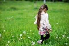 Het meisje dat van het kind paardebloemen op gebied verzamelt royalty-vrije stock fotografie