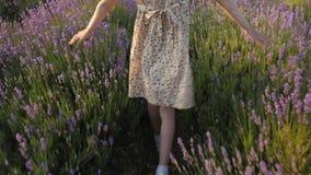 Het meisje in de kleding gaat door het bloemgebied van lavendel bij de zomerzonsondergang stock videobeelden