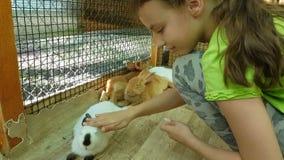 Het meisje die decoratieve konijnen voeden en communiceert met hen stock footage