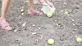 Het meisje die van de dorpsbewonervrouw appelen verzamelen stock videobeelden