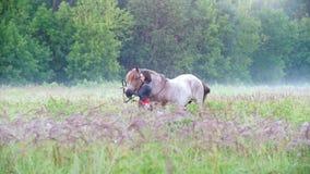 Het meisje draagt een hoofdband op een paard onder het gras tegen het bos en de mist stock videobeelden