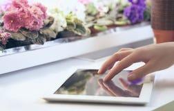 Het meisje draagt informatie over de groei van bloemen in de tablet op de achtergrond van het rek met viooltjes bij royalty-vrije stock foto