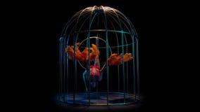 Het meisje in een kooi voert verschillende bewegingen met haar handen uit zij als een vogel is Zwarte achtergrond Langzame Motie stock video