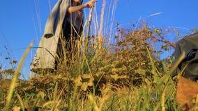 Het meisje in een laag in het park onderzoekt droog wild gras in de herfst stock footage
