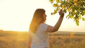 Het meisje gaat en raakt handentakken van bomen bij zonsondergang stock footage