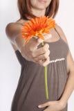 Het meisje geeft een bloem Royalty-vrije Stock Afbeeldingen