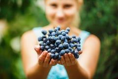 Het meisje geeft een grote bos van sappige druiven Royalty-vrije Stock Fotografie