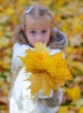Het meisje geeft gevallen bladeren Stock Afbeeldingen
